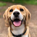 Libros para amantes de los perros